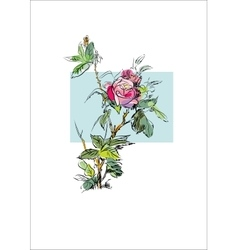 Plant flower rose vector image vector image