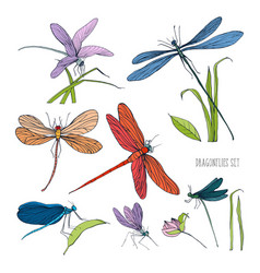 set of various dragonflies in different poses vector image vector image