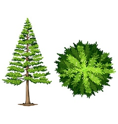 A pine tree vector