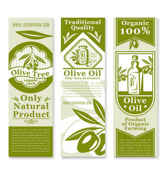 Olive oil banner with green fruit and branch vector