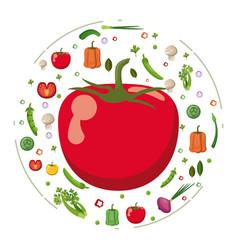 red tomato vegetables fresh tasty diet vector image