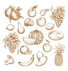 Fresh fruit sketch set for healthy food design vector image
