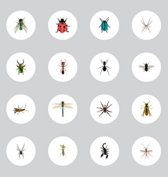 Realistic midge insect emmet and other vector