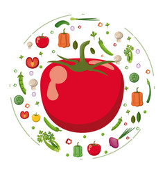 red tomato vegetables fresh tasty diet vector image vector image