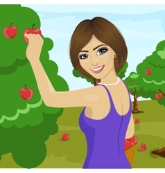 Woman picking red apples from tree in orchard vector
