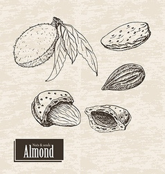 background with almond vector image