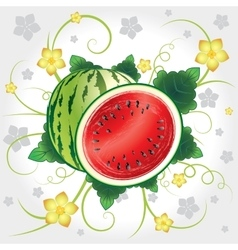 Watermelon whole and slices vector