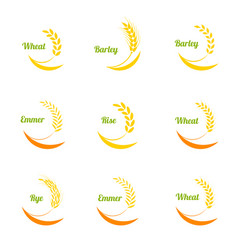 Wheat ears icons set vector