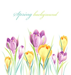 Spring background with crocuses vector