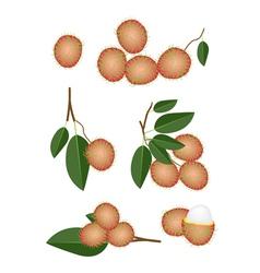 Set of Fresh Ripe and Juicy Rambutans vector image