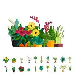 Big houseplants Set of flat potted interior vector image vector image