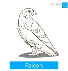 Falcon bird learn birds coloring book vector