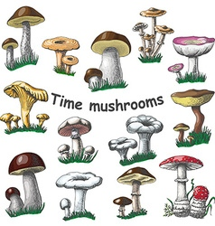 Collection of isolated mushrooms vector