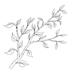 tree branch with leaves vector image vector image