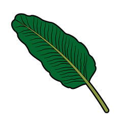 Exotic tropical leave botanical flora icon vector