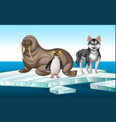 Walrus and penquin on iceberg vector