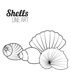 Shells line art vector image
