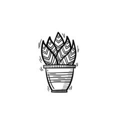 sansevieria trifasciata hand drawn sketch icon vector image vector image