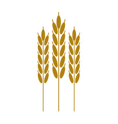 harvesting wheat ears cereal vector image