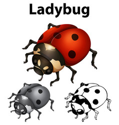 Ladybug in three sketches vector