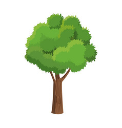 Tree plant natural foliage ecology vector