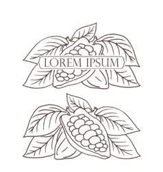 Hand drawing isolated cocoa beans vector