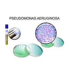 Pseudomonas aeruginosa bacterial inoculation vector