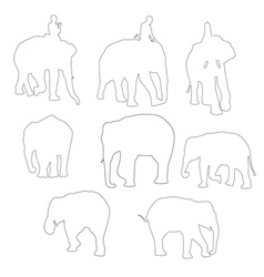 elephent vector image