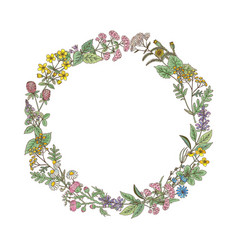 Wreath from hand drawn herbs and flowers vector