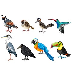 Different types of wild birds vector image vector image