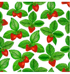 watercolor strawberry with green leaves on white vector image