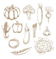 Retro stylized sketches of ripe vegetables vector
