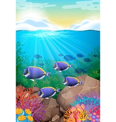 Fish swimming under the ocean vector