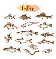 fish sorts and types hand drawn vector image