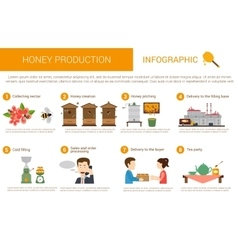 Honey production stages in infographic form vector