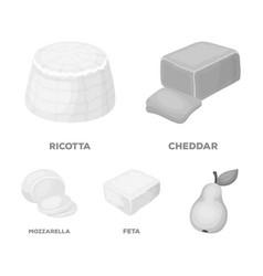 Mozzarella feta cheddar ricottadifferent types vector