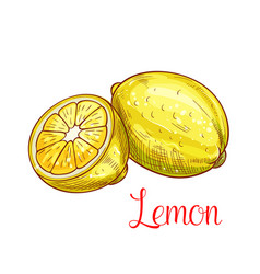 Lemon citrus fruit with slice isolated sketch vector