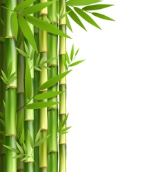 Green bamboo grove isolated on white vector