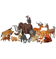 Different kind of wild animals vector