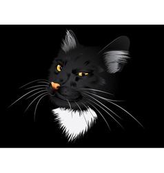 Black cat in the dark vector image vector image