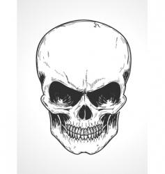 Human skull vector