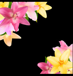 with lily flowers isolated on vector image vector image