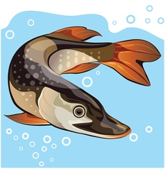 Fish big pike vector image vector image