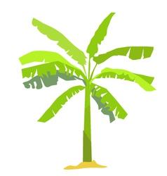 banana tree vector image