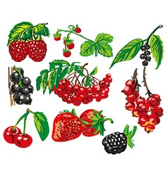 Colored berries on white background vector