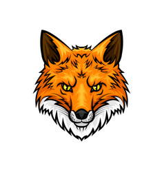 Fox head muzzle or snout mascot icon vector