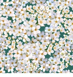 Seamless background from cherries flower vector image vector image