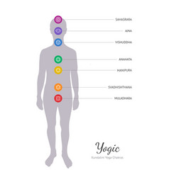 Seven chakras energy body vector
