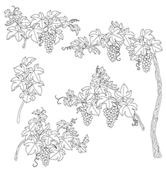 Grape outline set vector