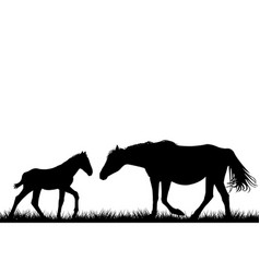 Silhouettes of mare and her foal vector